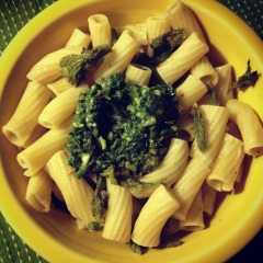ziti with devil's club shoots & wood sorrel pesto